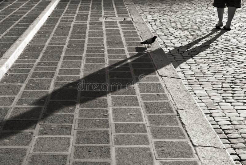 Pigeon sur des escaliers de pavé rond à Rome, noir et blanc photo stock