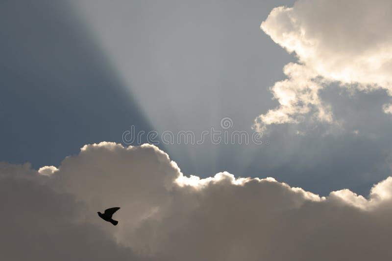Pigeon sur des nuages avec photos stock