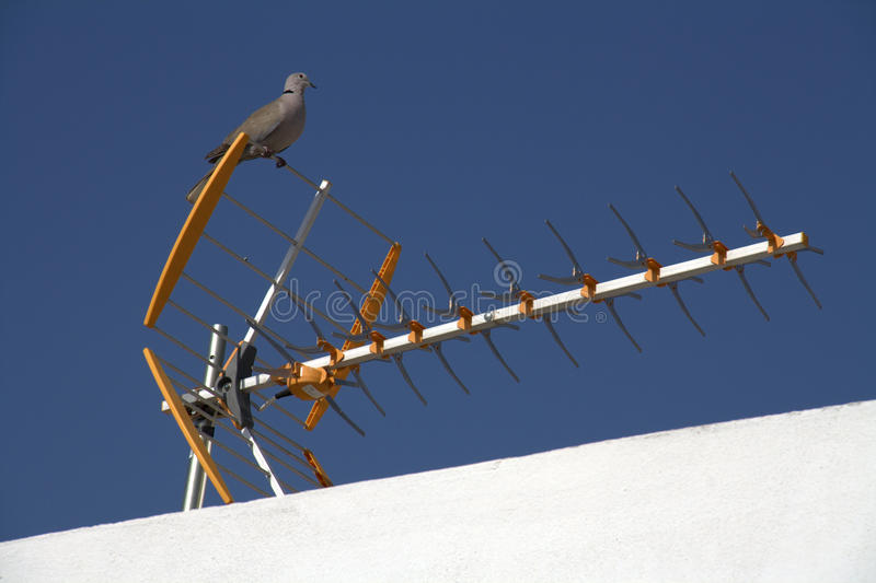 Pigeon On TV Antenna Stock Photos