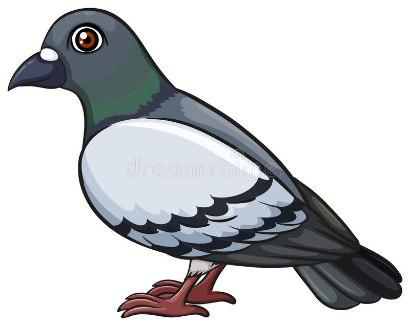 A pigeon vector illustration