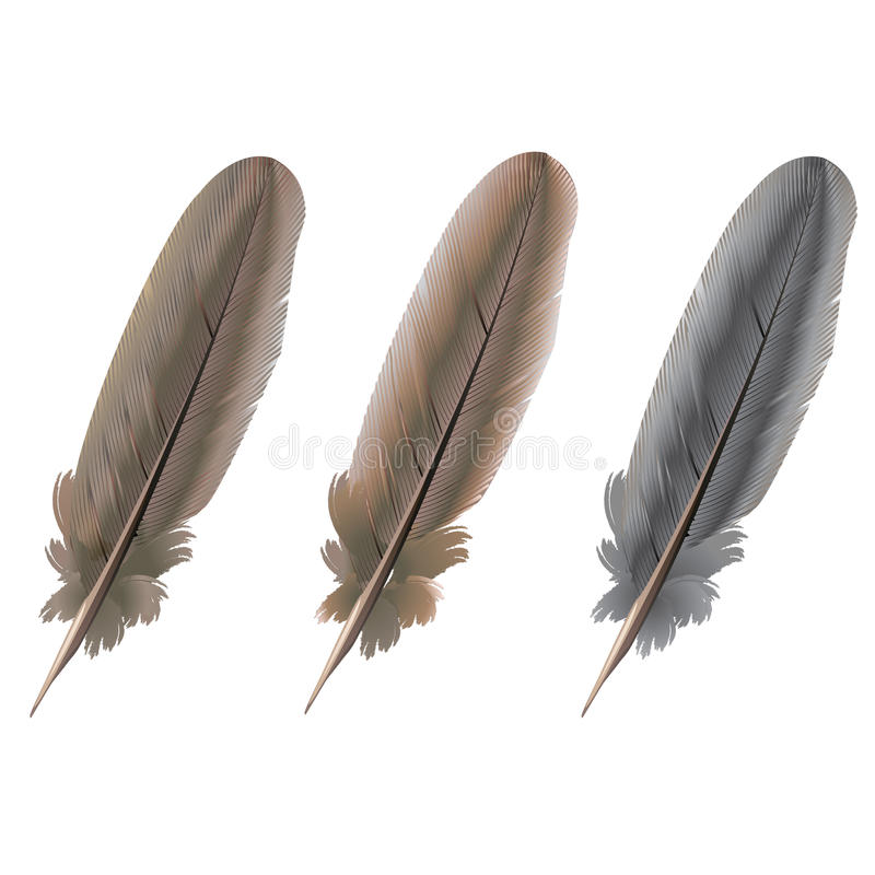 Pigeon white feather stock image