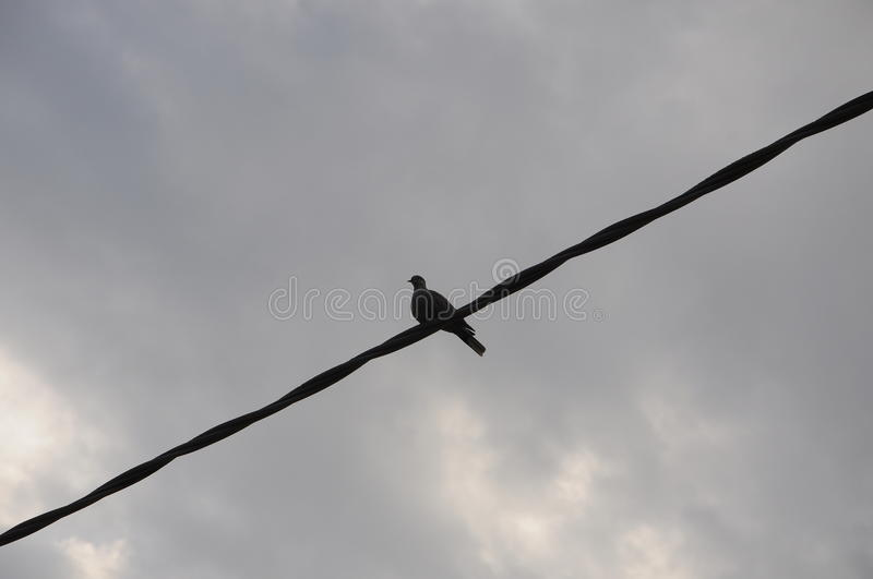 A pigeon on the wire. Under the grey sky royalty free stock images