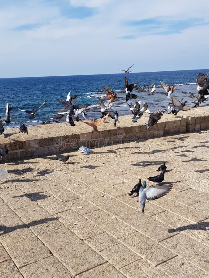Pigeons on Acre. Acre, Israel. Pigeons. Ses. Nature. Blue sky. Bluewater. rnPicture of Acer, Israel. Pigeons flying on the water royalty free stock photos