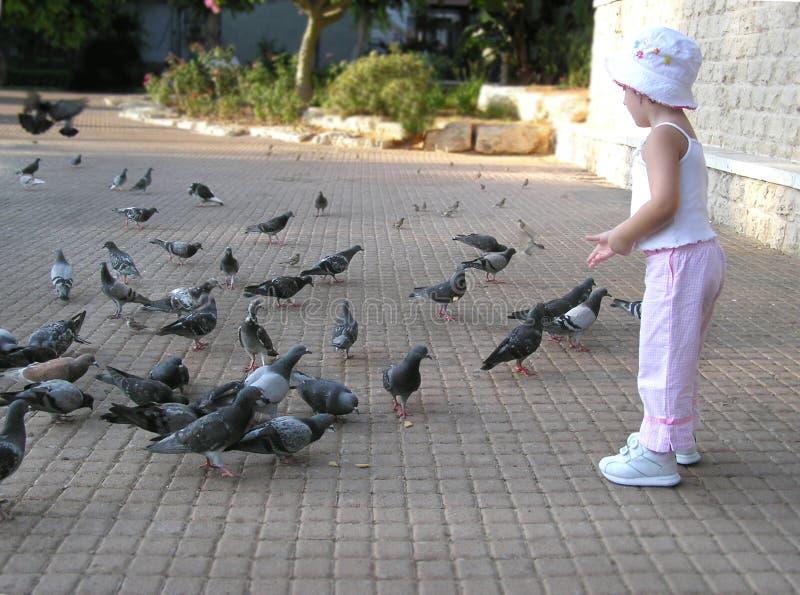 Pigeons alimentants de petite fille photographie stock