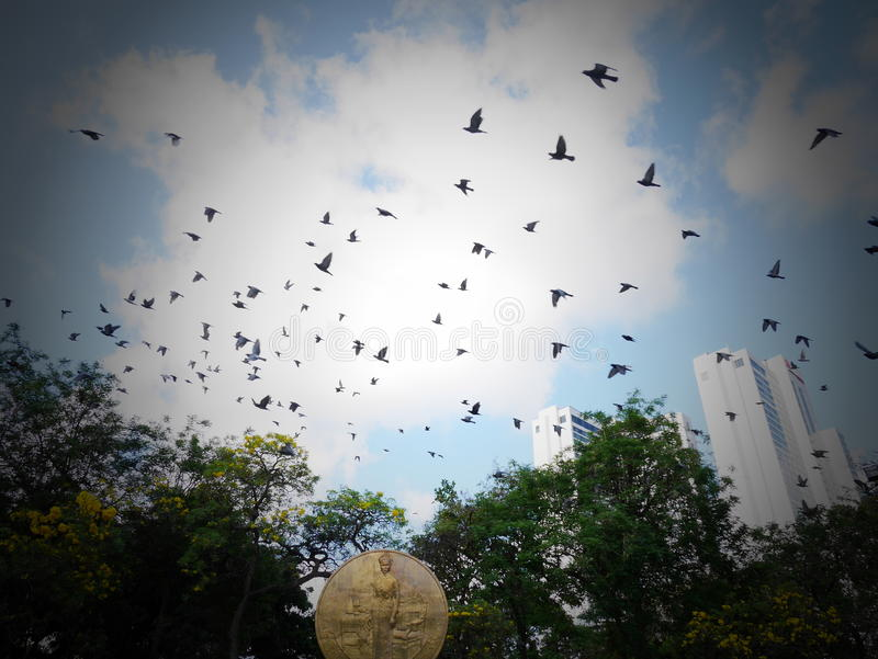 Pigeons au parc de Benjasiri photographie stock libre de droits