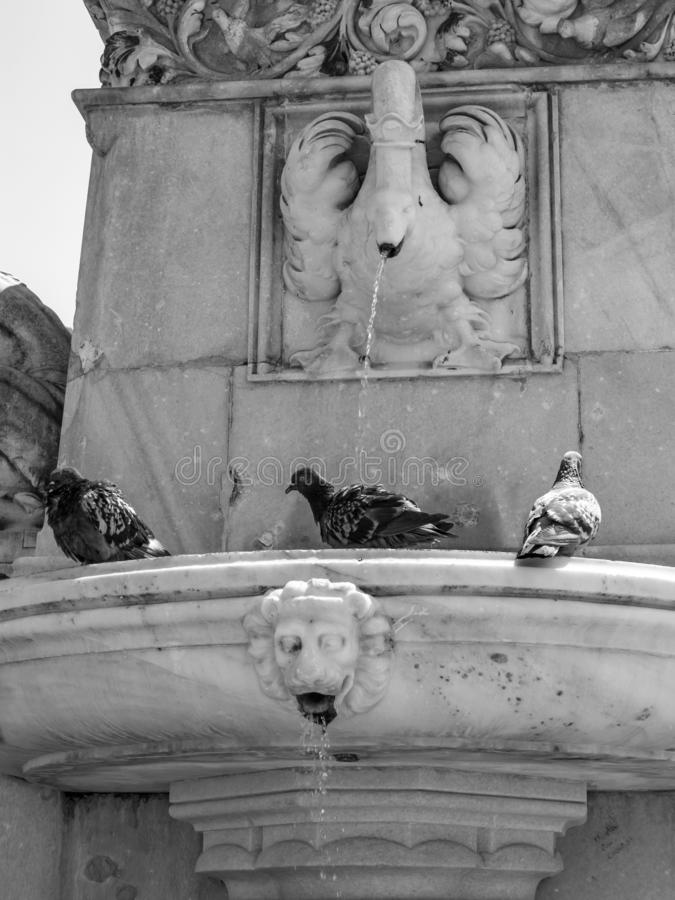 Pigeons bathing in the fountain under the statue of Walther von der Vogelweide on Walther Square in Bolzano, Italy stock photo