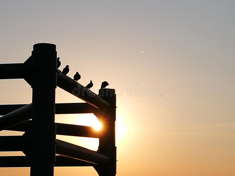 Pigeons on the beam stock image