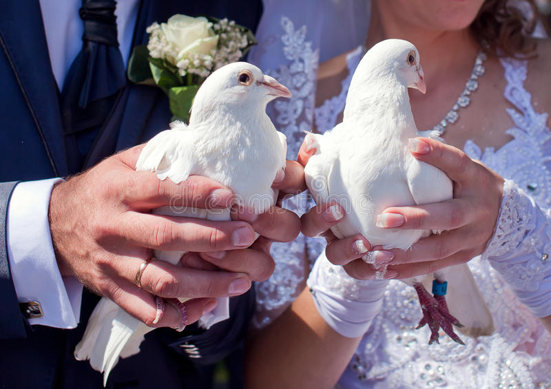 Pigeons blancs photographie stock libre de droits