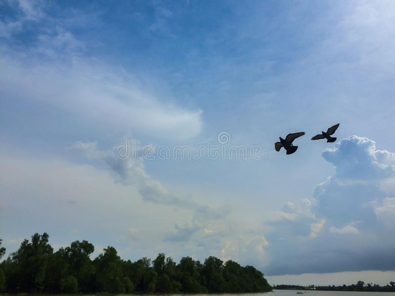 Pigeons on blue sky. It has freedom royalty free stock photo