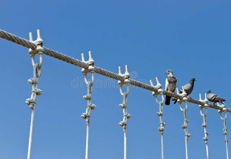 Download Pigeons On Cable Of The Bridge Stock Image - Image of freedom, bridge: 21996137