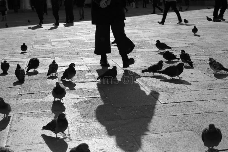 Pigeons dans la place avec l'effet noir et blanc photographie stock