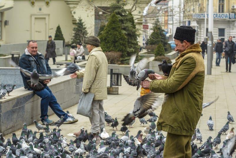 Pigeons de alimentation photos stock