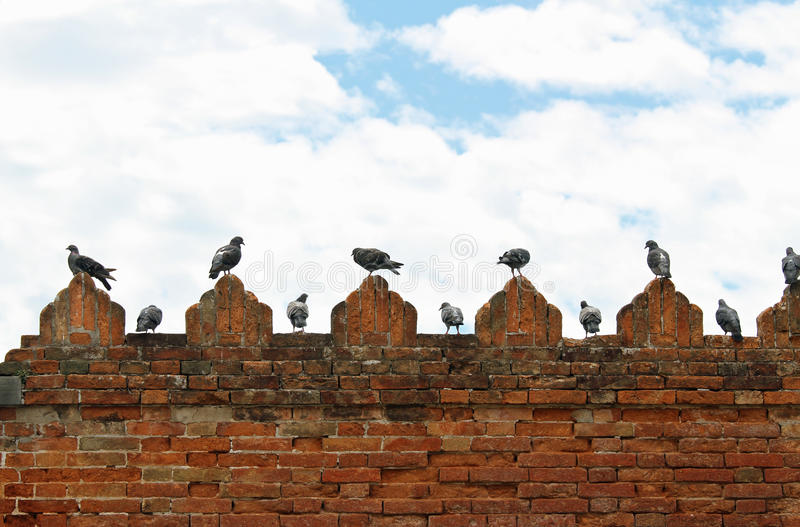 Pigeons and doves on spires of castle wall stock photography