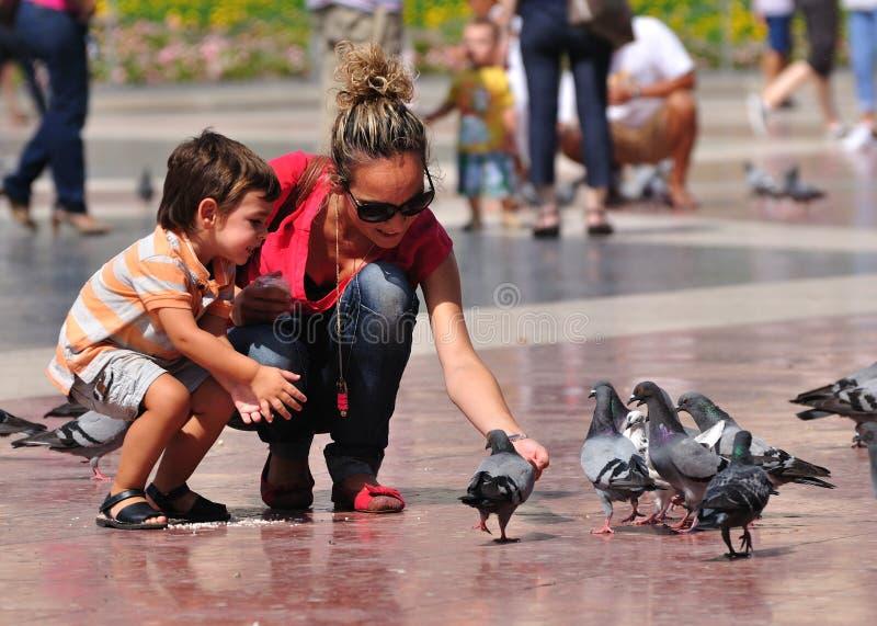 Pigeons feeding. stock photo