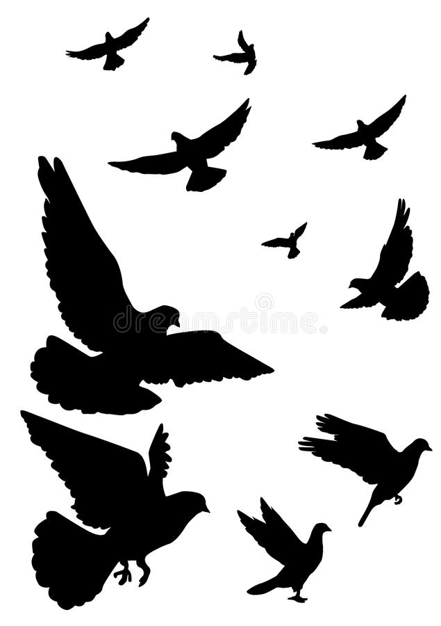 Free Pigeons Fly, Flock Stock Image - 70387321