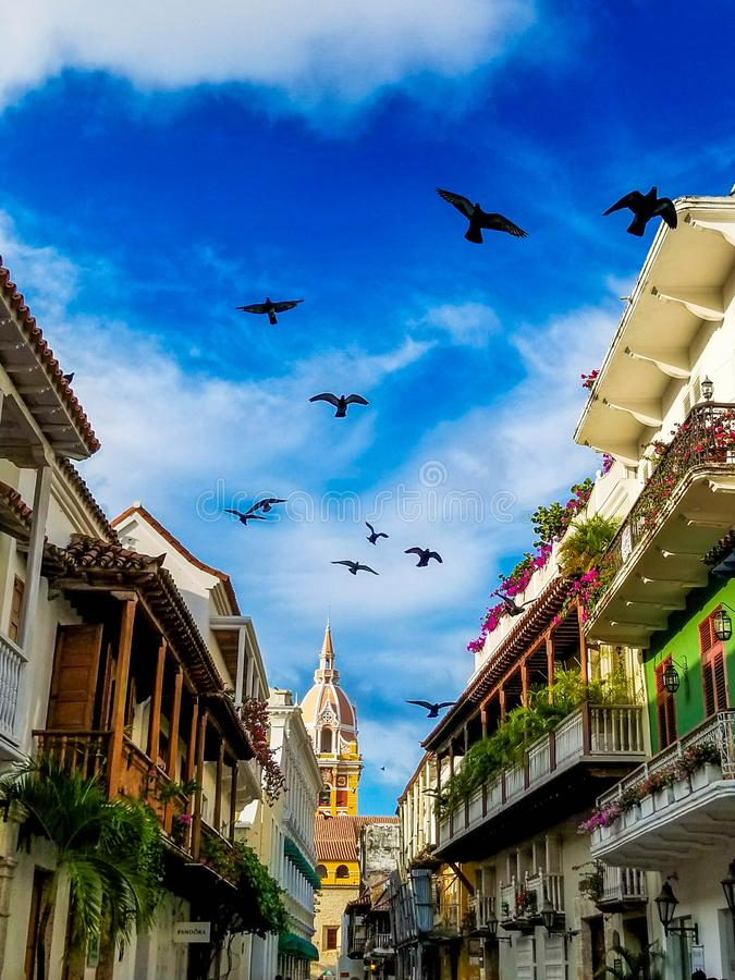 Pigeons flying in the Walled City of Cartagena stock photo