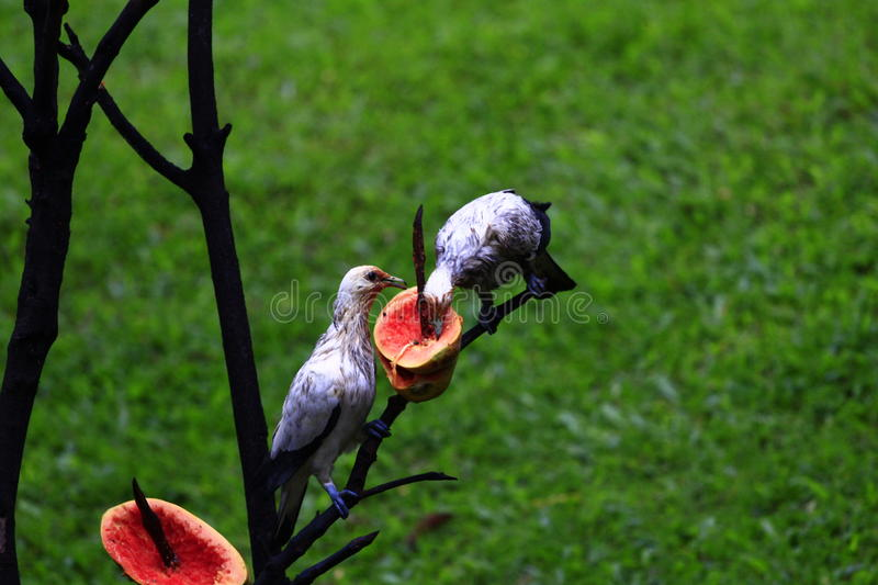 The pigeons royalty free stock photography
