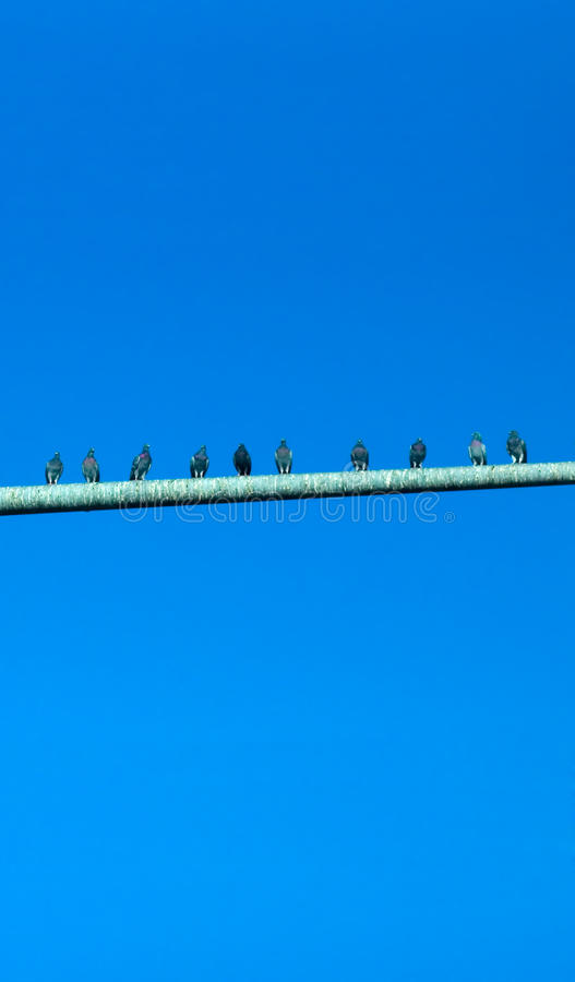 Download Pigeons On Poo Covered Pole Stock Photo - Image of pigeons, feces: 9461756