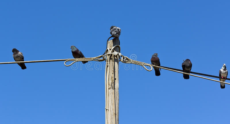 Pigeons resting on wire against blue sky stock photo