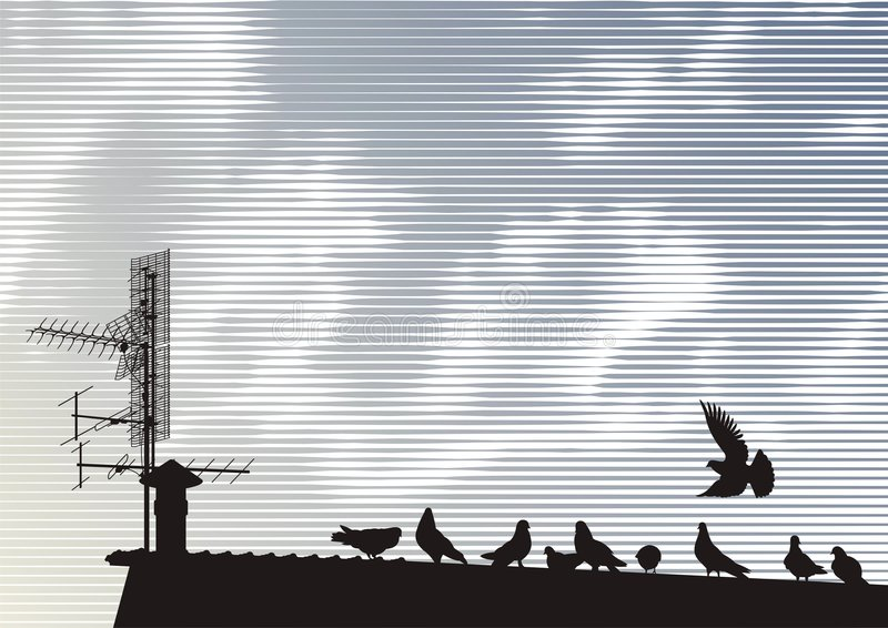 Pigeons on the roof vector illustration