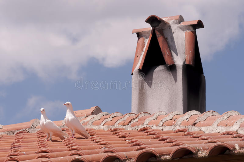 Download Pigeons On Roof By Chimney Royalty Free Stock Photo - Image: 24808365