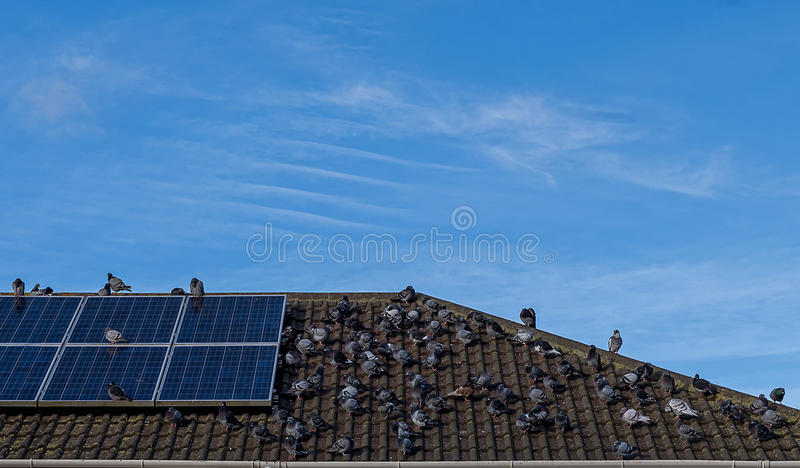 Pigeons on the roof. stock image