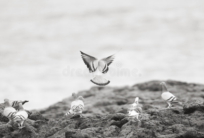 Download Pigeons at the sea shore stock photo. Image of shore, puerto - 500166