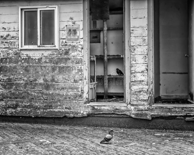 Pigeons sit inside black and white decaying building on California Pier. Black and white decaying building on California pier with pigeons royalty free stock photo