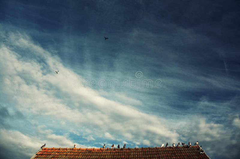 Pigeons. Sitting and flying over the roof royalty free stock photos