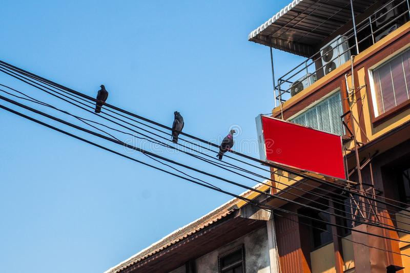 Pigeons sitting on wires with background building , flying stock photo