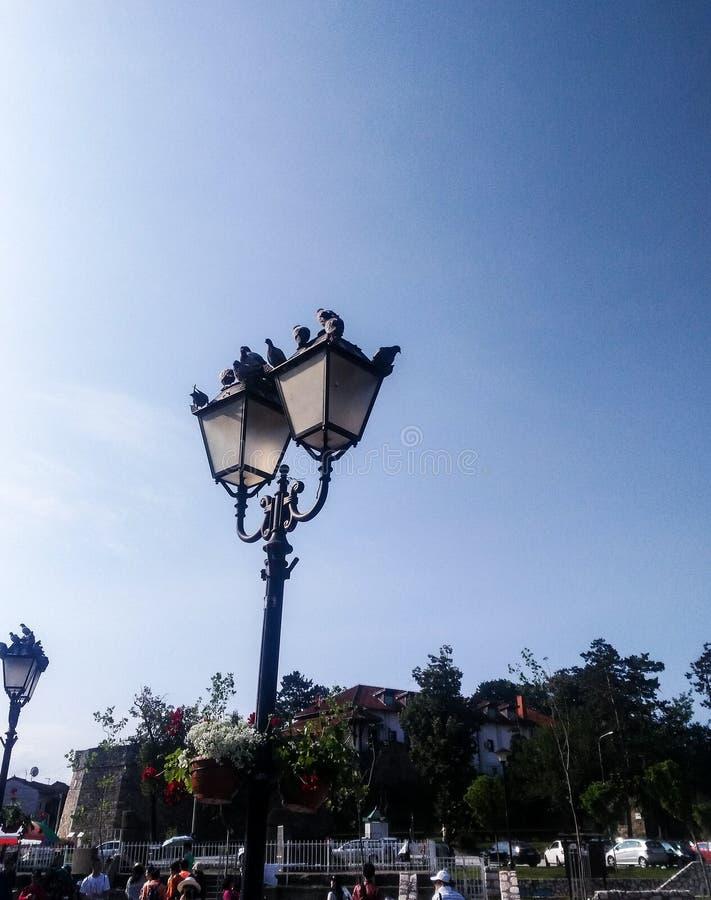 Pigeons sur l'éclairage routier dans Novi Pazar photo stock