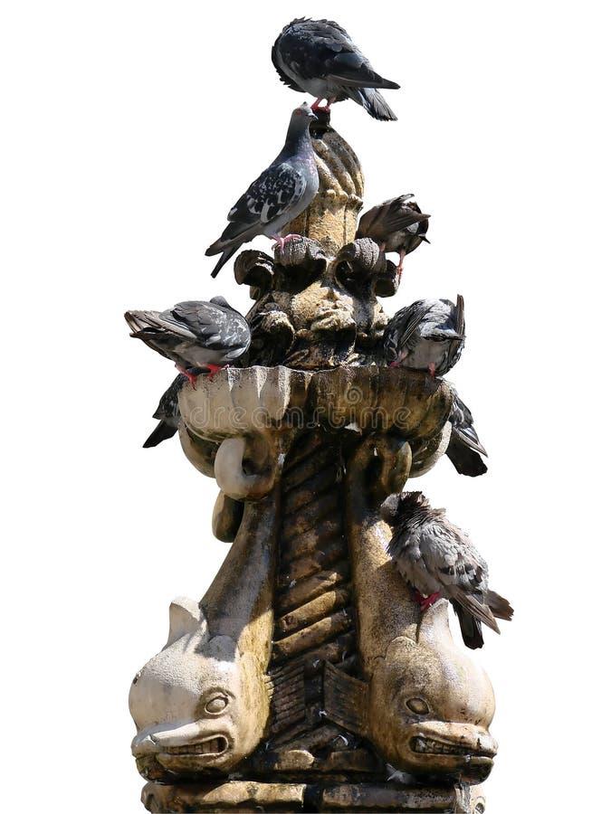 Pigeons sur la fontaine de petit Onofrio images libres de droits