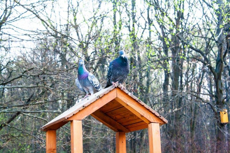 Pigeons sur une cage en parc images stock