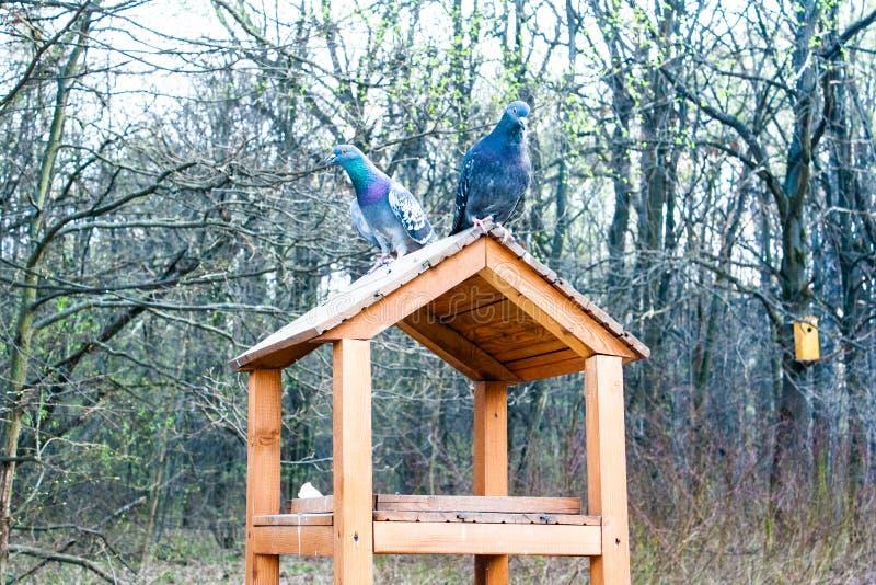 Pigeons sur une cage en parc photo libre de droits