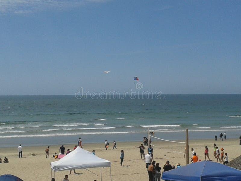 Pigeons volants mouette et pélicans au-dessus de ciel bleu de mer de brise-lames d'esplanade de plage d'Ensenada de vagues nuageu images libres de droits