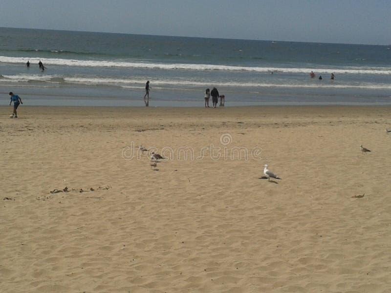 Pigeons volants mouette et pélicans au-dessus de ciel bleu de mer de brise-lames d'esplanade de plage d'Ensenada de vagues nuageu photo stock