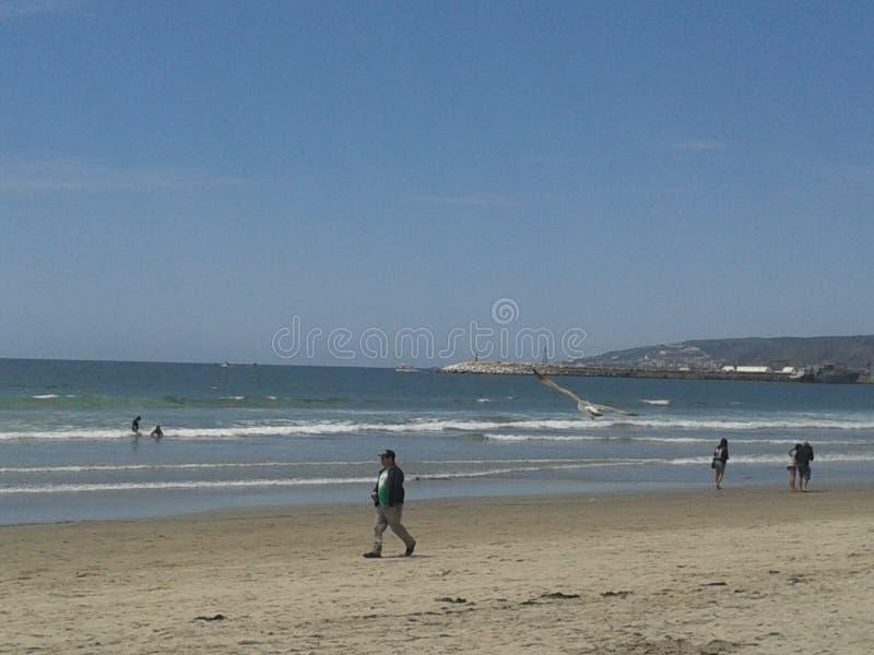 Pigeons volants mouette et pélicans au-dessus de ciel bleu de mer de brise-lames d'esplanade de plage d'Ensenada de vagues nuageu images stock