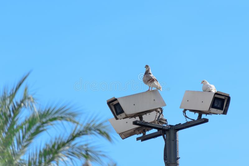 Pigeons are watching from surveillance cameras stock photos