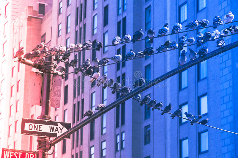 Pigeons at the winter in New York City stock photo