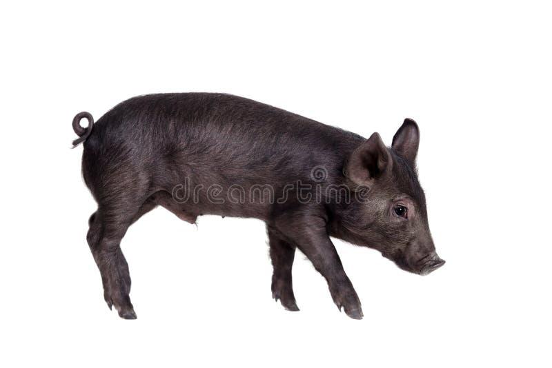 Piggy που απομονώνεται μαύρος στο λευκό στοκ φωτογραφίες με δικαίωμα ελεύθερης χρήσης