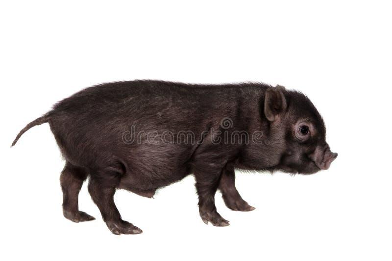 Piggy που απομονώνεται μαύρος στο λευκό στοκ εικόνα με δικαίωμα ελεύθερης χρήσης