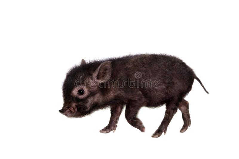 Piggy που απομονώνεται μαύρος στο λευκό στοκ εικόνα