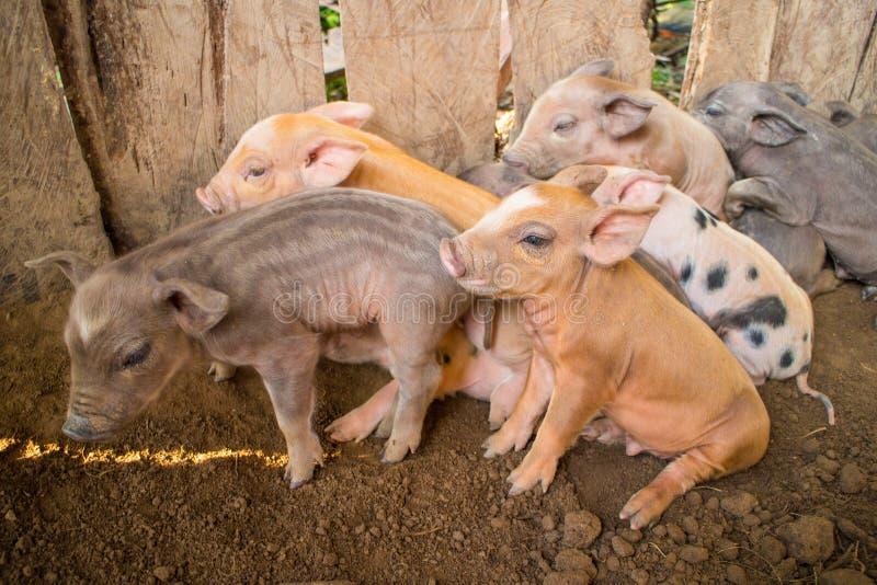 Piggy стоковая фотография rf