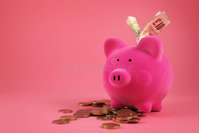 Piggy bank full of Money royalty free stock image