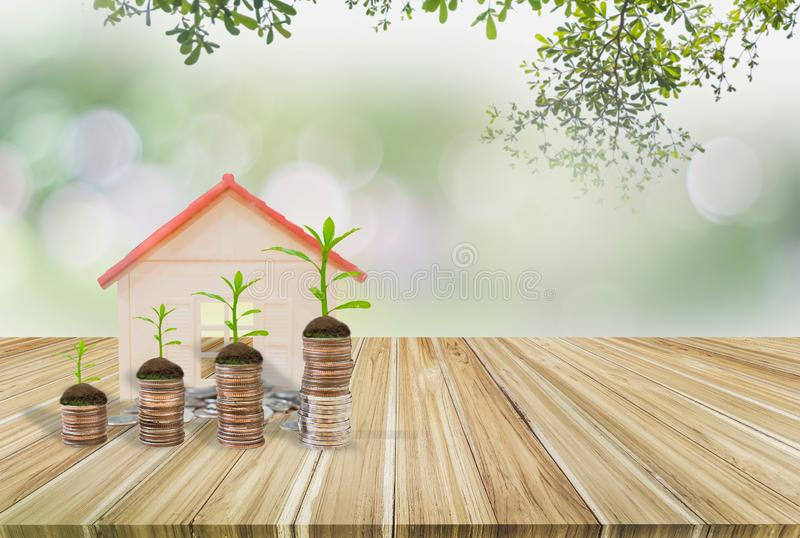 Piggy bank green,wooden table,tree growing on stack coins,house model,Background nature blurred,concept financial growth saving, royalty free stock photo