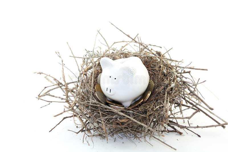 Download Piggy Bank Nest Egg stock image. Image of white, mockingbird - 18433229