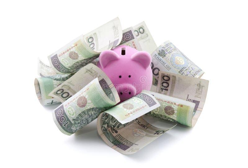 Piggy bank with polish money. stock photo