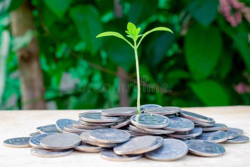 piggy sättande sparande för grupppengar arkivbilder