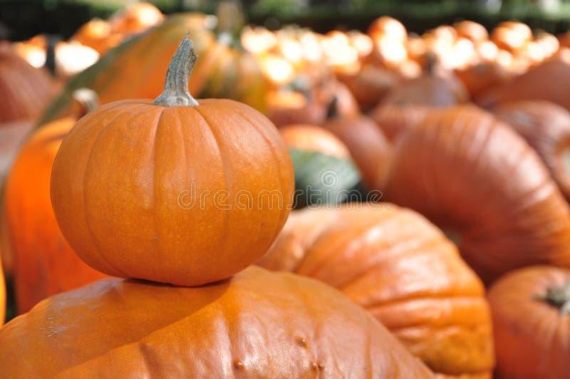 Piggyback Pumpkin stock photos