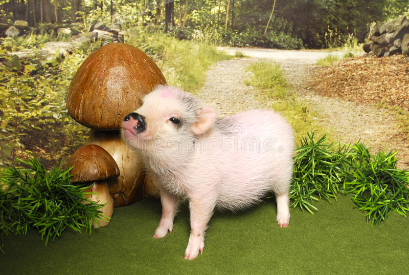 Piglet in a woodland scene stock photography
